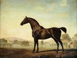 George Stubbs - Sweetwilliam', a Bay Racehorse, in a Paddock, 1779 Digitálně vytištěná reprodukce