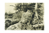 Berguv (Eagle Owl) Bubo Bubo, 1894 Gicléedruk van Bruno Andreas Liljefors
