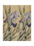 Iris, 1898 Reproduction procédé giclée par Kolo Moser