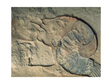 Detail of Relief Showing Nefertiti Kissing Her Daughter, Perhaps Merytaten, under the Rays of the… Giclee Print