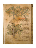 Folio 22R of the Arabic Version of Dioscorides' De Materia Medica Giclee Print
