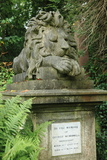 Lion, Highgate West Photographic Print