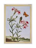 La Fleur Tachete Des Incas (Peruvian Lily), C.1766 Giclee Print by Pierre-Joseph Buchoz
