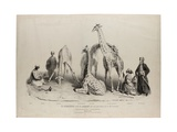 The Giraffes with the Arabs Who Brought Them over to This Country, Zoological Gardens, Regents… Giclee Print by George Snr Scharf