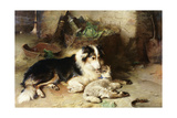 Motherless: the Shepherd's Pet, 1897 Giclee Print by Walter Hunt