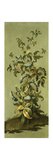 Decorative Panels with Flowers Giclee Print by Jean Baptiste Pillement
