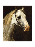 Head of a Piebald Horse Giclee Print by Théodore Géricault