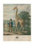 Portrait of the Giraffe, 1827 Giclee Print by Abraham Bruiningh van Worrell