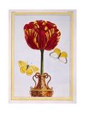 Tulip 'Le Drap D'Or, C.1776 Giclee Print by Pierre-Joseph Buchoz