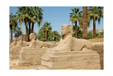 View of the Avenue of Sphinxes Added to the Temple by the Pharaoh Nectanebo I to Connect Luxor to… Giclee Print