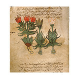 Folio 4R of the Arabic Version of Dioscorides' De Materia Medica Giclee Print