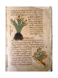 Folio 5V of the Arabic Version of Dioscorides' De Materia Medica Giclee Print
