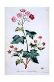 Sweet Canada Raspberry [Rubus Odoratus], Illustration from 'The British Herbal' by John Edwards,… Giclee Print by John Edwards