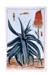 Aloe, Illustration from 'Collection Precieuse Et Enluminee Des Floura', by Pierre Joseph Buchoz,… Giclee Print by Pierre-Joseph Buchoz