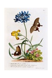Polianthes, Oxalis and Iris, 1749 Giclee Print by Georg Dionysius Ehret