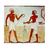 A Detail of Wall Painting in the Tomb of Menna Showing the Harvesting of the Wheat Giclee Print