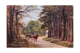 Broadwater Forest, Tunbridge Wells Giclee Print by Alfred Robert Quinton