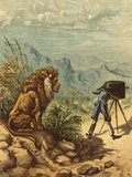 Promising Outlook, Lion Observes Photographer Photographic Print by Ernest Henry Griset