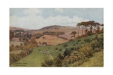 Cissbury Ring Near Worthing Giclee Print by Alfred Robert Quinton