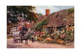 Hollyhocks, Cropthorne, Evesham Giclee Print by Alfred Robert Quinton