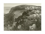 On the Hillside Giclee Print by William Holman Hunt