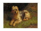 Soft Coated Wheaten Terrier Giclee Print by Alfred Duke