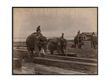 Working with Elephants, C.1880 Giclee Print by Philip Adolphe Klier