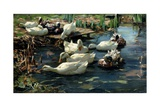 Ducks in a Pool Giclee Print by Alexander Koester