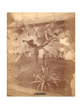 Banana Tree, Pennsylvania Centennial Exhibition, 1876 Giclee Print