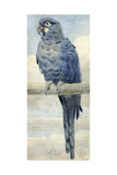 Hyacinthine Macaw, 1889 Giclee Print by Henry Stacey Marks