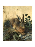 Hare Giclee Print by Hans Hoffmann