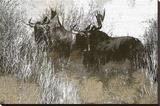 Wildlife Lærredstryk på blindramme
