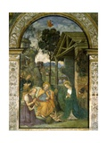 Nativity, C.1484-92 Giclee Print by Bernardino di Betto Pinturicchio