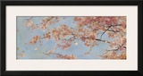 Osaka Blossoms I Print by Rob Cherry