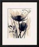 Lotus and Grasses Prints by Judith Mcmillan
