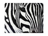 Zebra Giclee Print