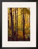 Sanctuary Woods I Posters by Kathy Mansfield