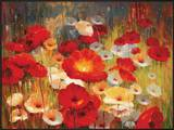 Meadow Poppies I Prints by Lucas Santini
