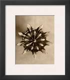 Sepia Botany Study IV Framed Giclee Print by Karl Blossfeldt