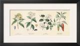 Spice Plants II Art by William Rhind