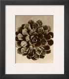 Sepia Botany Study II Framed Giclee Print by Karl Blossfeldt
