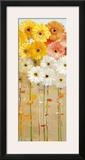Daisies Fall I Prints by Danhui Nai