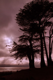 Moonstone Beach Tree Silhouettes Photographic Print by Vincent James