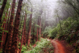 Misty Trail Through the Woods Photographic Print by Vincent James