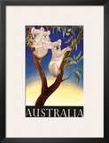 Australia Koala c.1956 Prints by Eileen Mayo