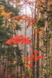 Fall Color and Mist II Photographic Print by Vincent James