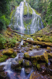 Scene at Proxy Falls Photographic Print by Vincent James