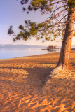 Tahoe Lake Tree Photographic Print by Vincent James