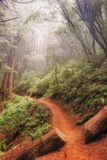 On the Misty Coast Trail at Muir Woods Photographic Print by Vincent James
