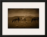 Western Foal Framed Giclee Print by Jim Tunell